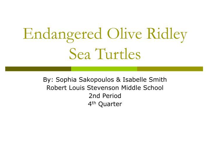 endangered olive ridley sea turtles n.
