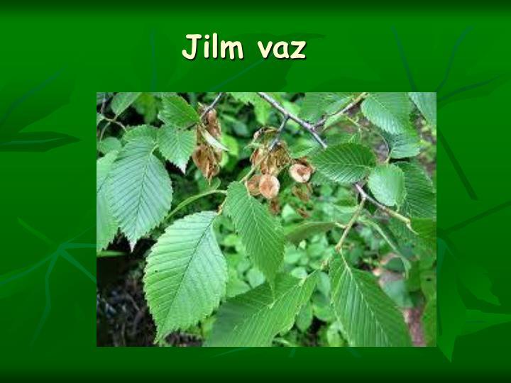 Jilm vaz
