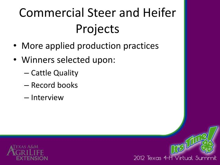 Commercial Steer and Heifer Projects