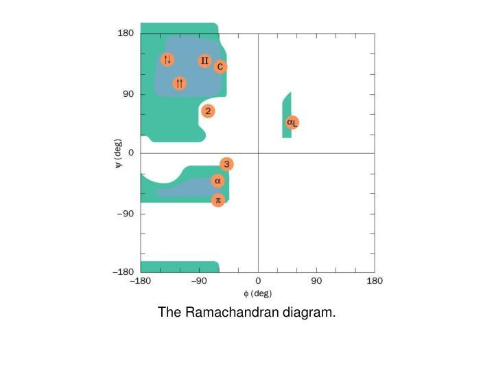 the ramachandran diagram n.