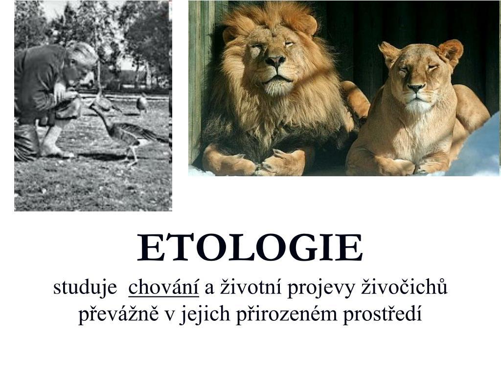 Ppt Etologie Studuje Chovani A Zivotni Projevy Zivocichu Prevazne
