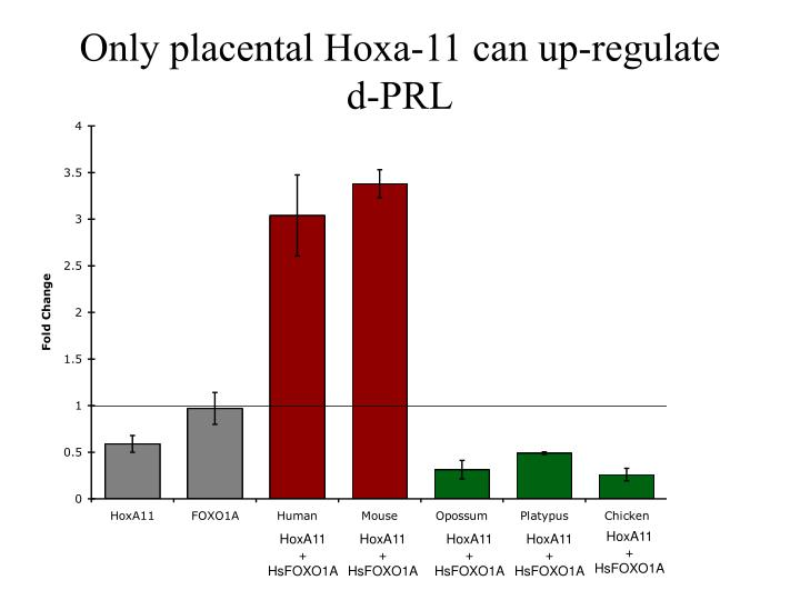 Only placental Hoxa-11 can up-regulate d-PRL