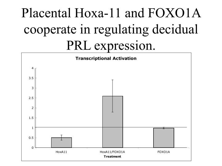Placental Hoxa-11 and FOXO1A cooperate in regulating decidual PRL expression.