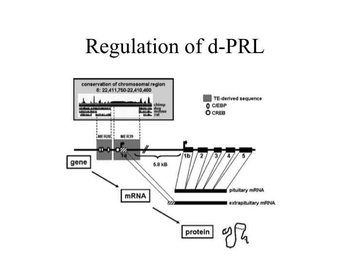Regulation of d-PRL
