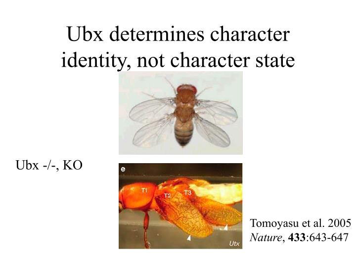 Ubx determines character identity, not character state