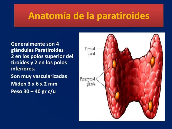PPT - TRASTORNOS DE LAS PARATIROIDES Y DEL CALCIO PowerPoint ...
