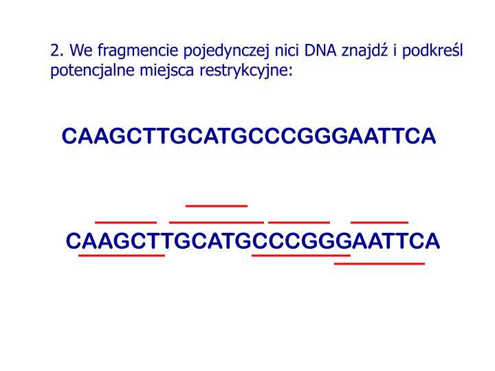 2. We fragmencie pojedynczej nici DNA znajdź i podkreśl potencjalne miejsca restrykcyjne: