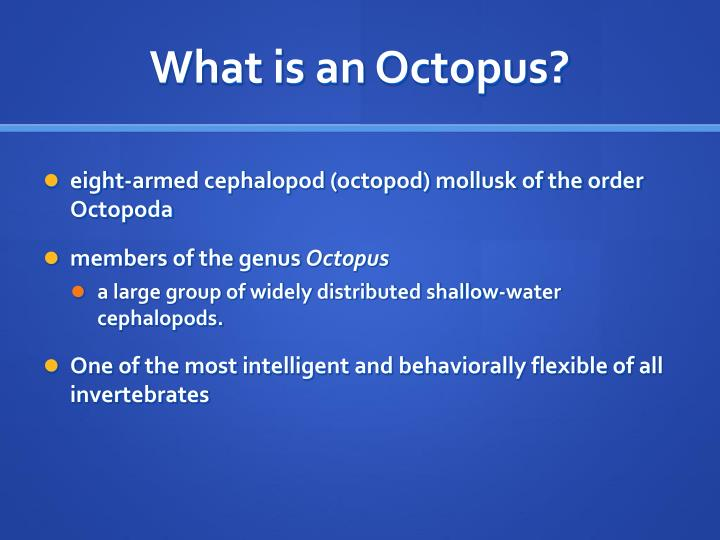 What is an octopus