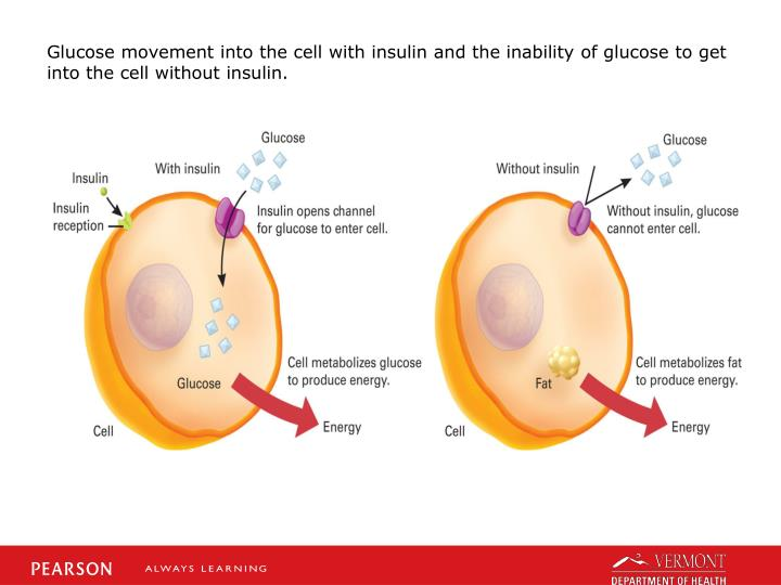 Glucose movement into the cell with insulin and the inability of glucose to get into the cell without insulin.