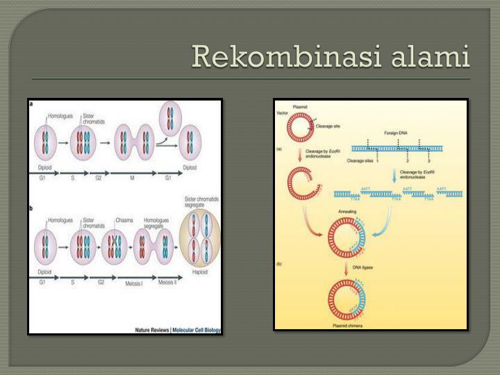 Rekombinasi