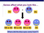 genes affect what you look like2