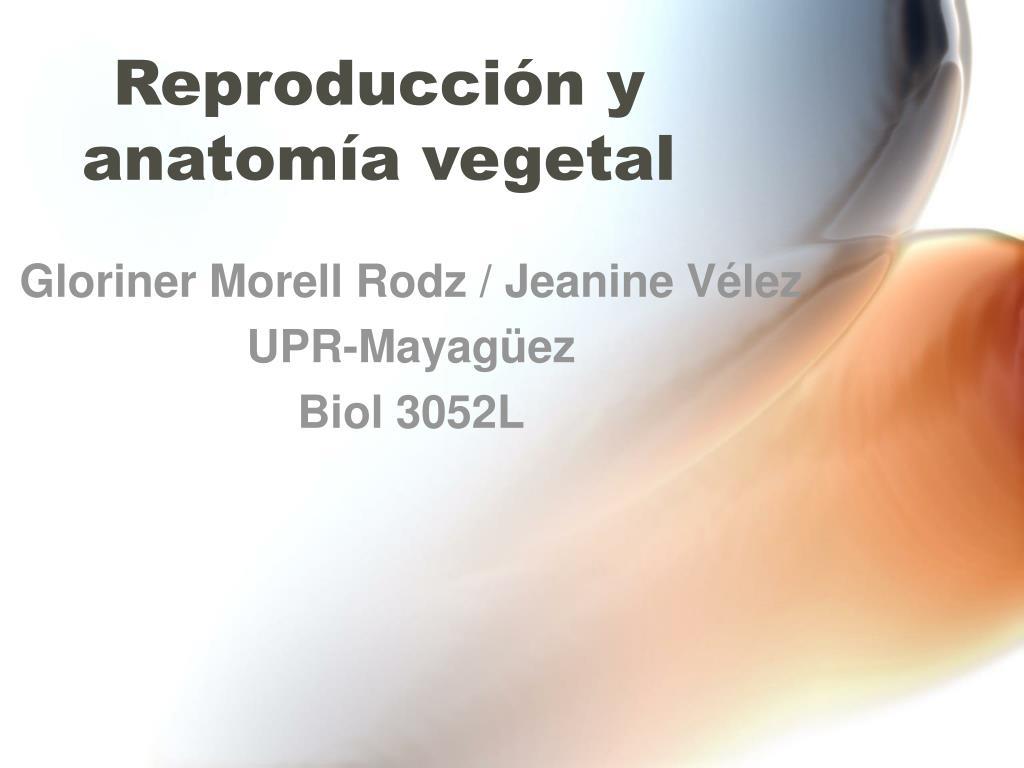 PPT - Reproducción y anatomía vegetal PowerPoint Presentation - ID ...