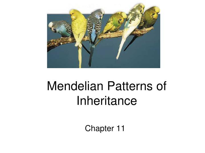 mendelian patterns of inheritance n.