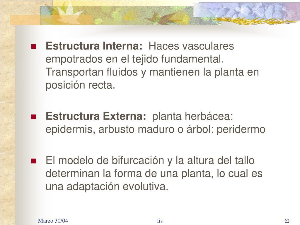 Ppt El Cuerpo De Las Plantas Powerpoint Presentation Free