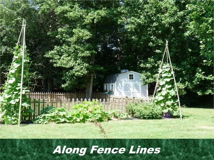 Along Fence Lines