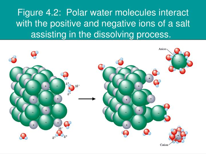 Figure 4.2:  Polar water molecules interact with the positive and negative ions of a salt assisting in the dissolving process.