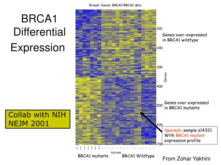 BRCA1 Differential Expression