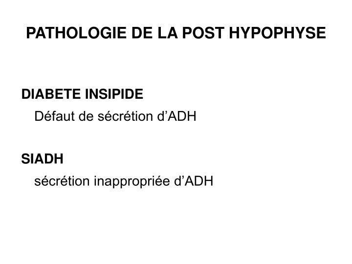 PPT - HYPOPHYSE PowerPoint Presentation - ID:3552321