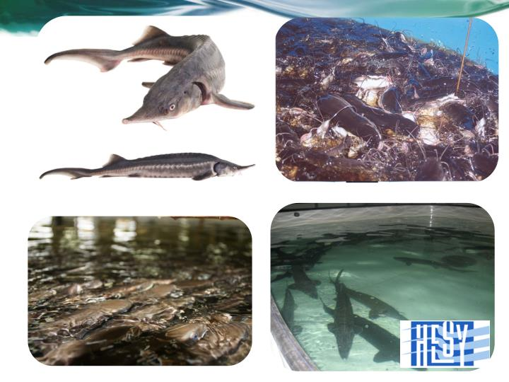 Hesy aquaculture