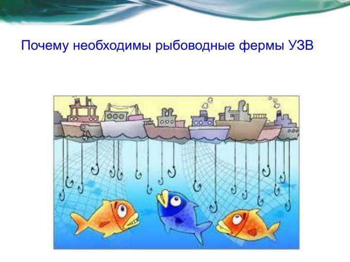 Почему необходимы рыбоводные фермы УЗВ