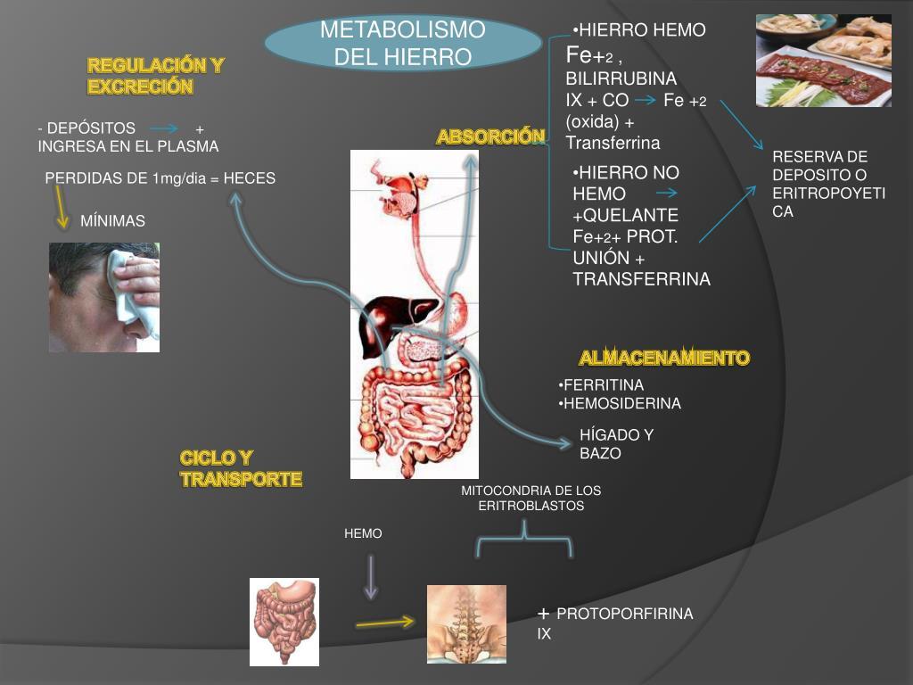 3 cosas que debes saber sobre Metabolismo basal
