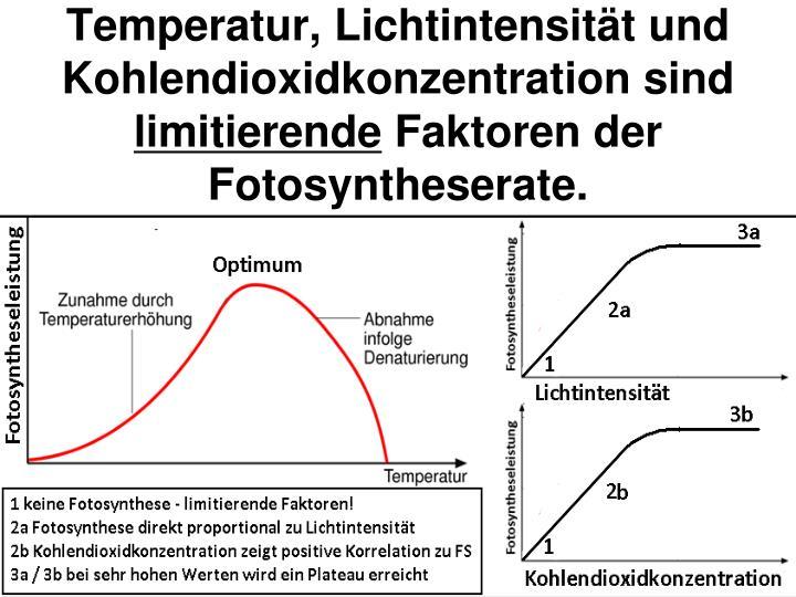 Fein Faktoren Die Die Photosynthese Arbeitsblatt Antworten Bilder ...