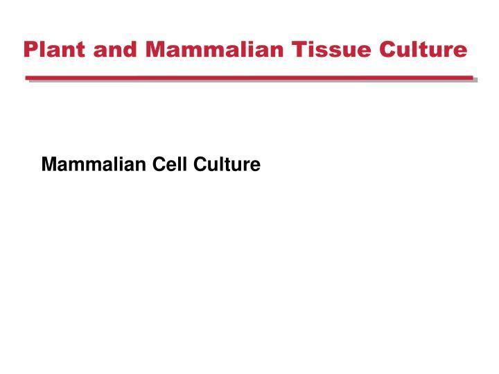 plant and mammalian tissue culture n.