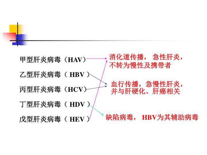 甲型肝炎病毒(