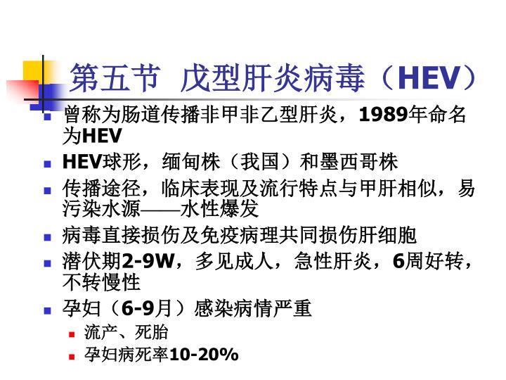 第五节  戊型肝炎病毒(