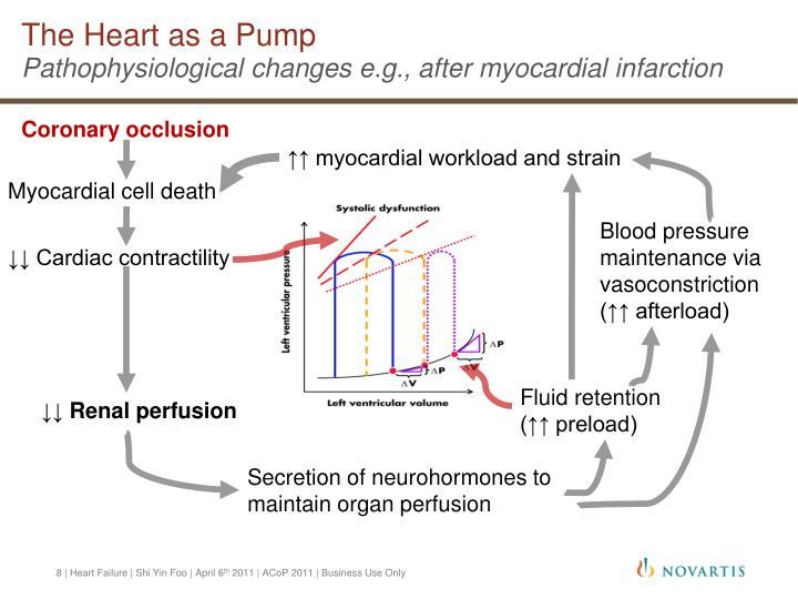 The Heart as a Pump