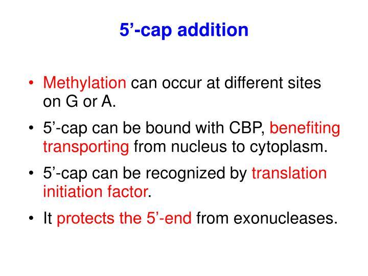 5'-cap addition