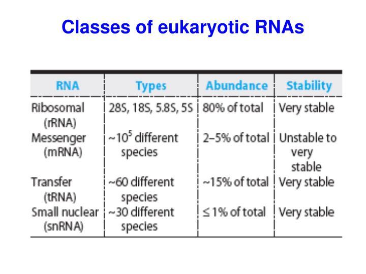 Classes of eukaryotic RNAs