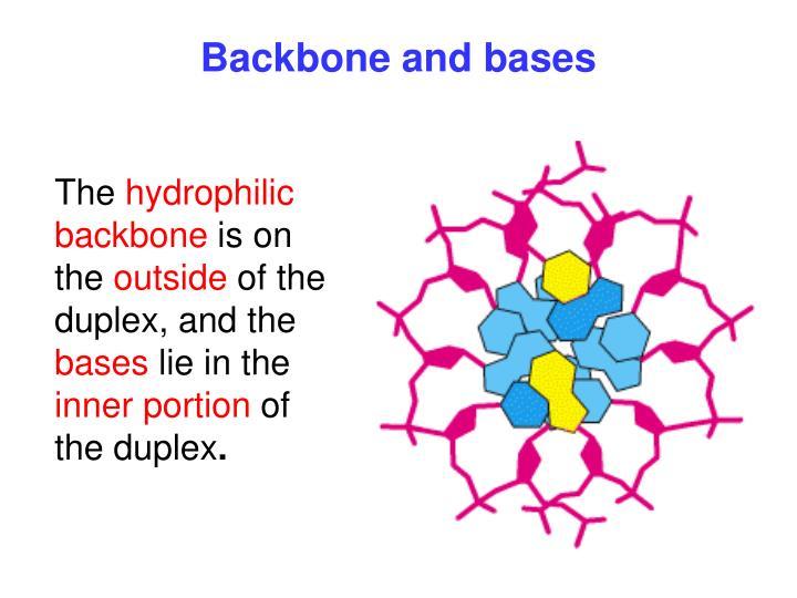 Backbone and bases