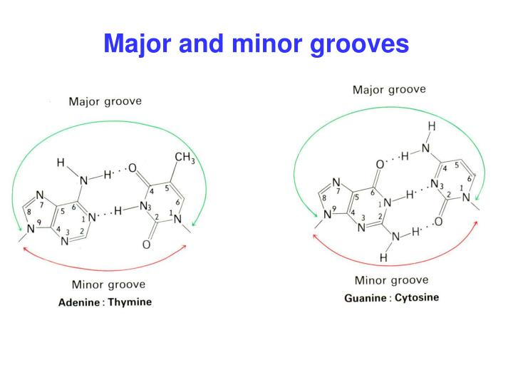 Major and minor grooves