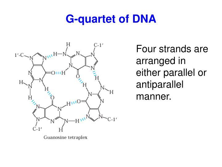 G-quartet of DNA
