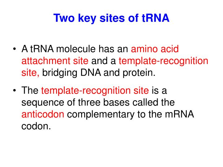 Two key sites of tRNA