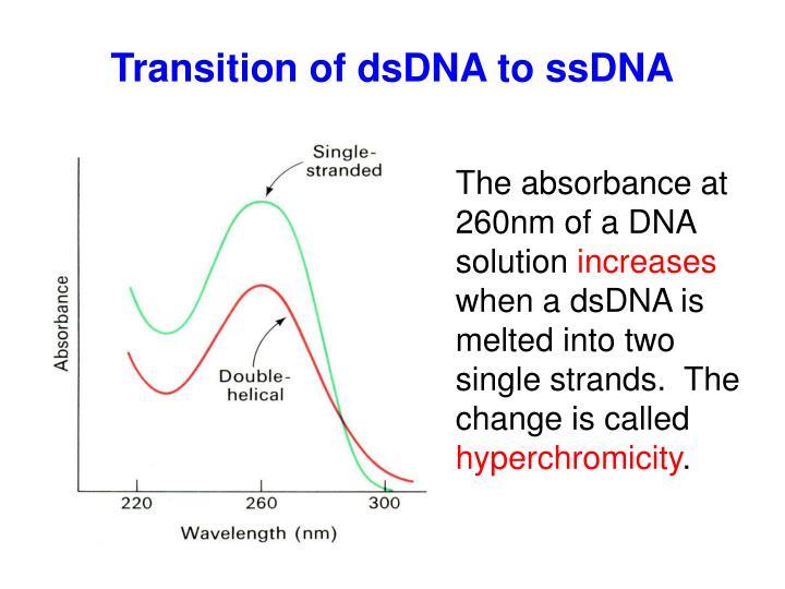 Transition of dsDNA to ssDNA