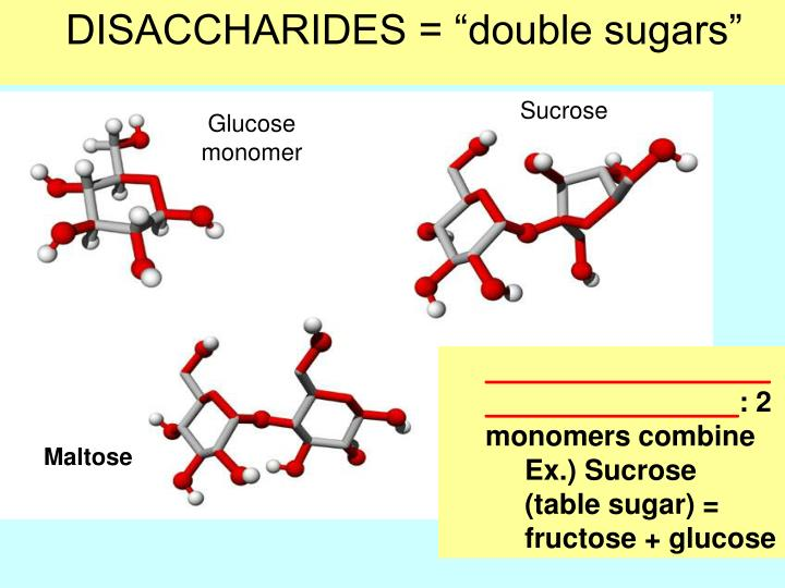 "DISACCHARIDES = ""double sugars"""