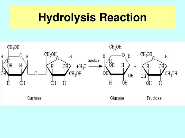 Hydrolysis Reaction