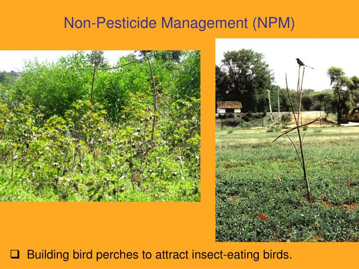 non pesticidial management Csa has pioneered the concept of non pesticidal management which is now  practiced by millions of farmers in andhra pradesh the ecological and  economical.