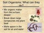 soil organisms what can they do