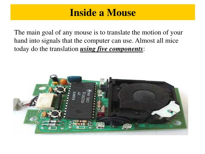Inside a Mouse