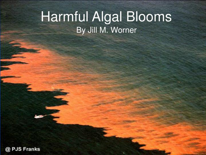 times algal blooms General information what are algae algal blooms more often occur in water with increased levels of nutrients, such as nitrogen and phosphorus.