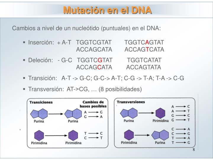 Mutación en el DNA