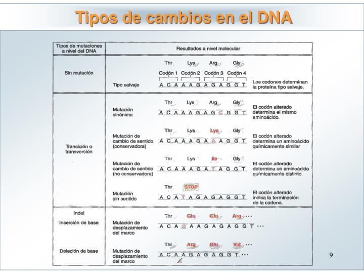 Tipos de cambios en el DNA