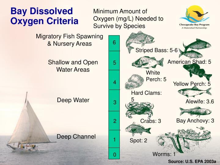 Bay Dissolved Oxygen Criteria