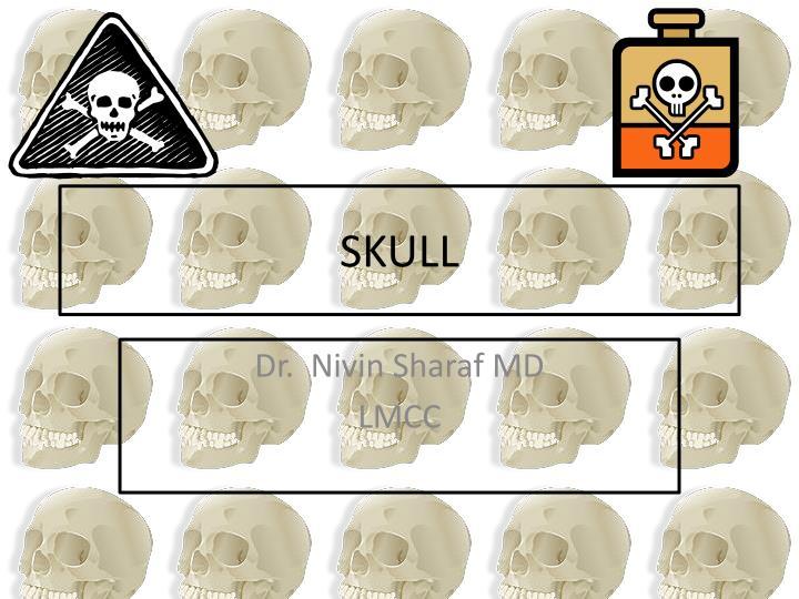 skull n.