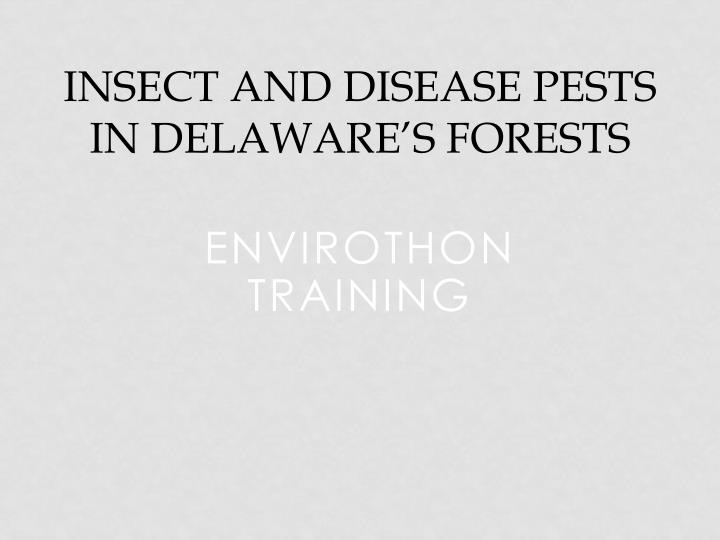insect and disease pests in delaware s forests n.