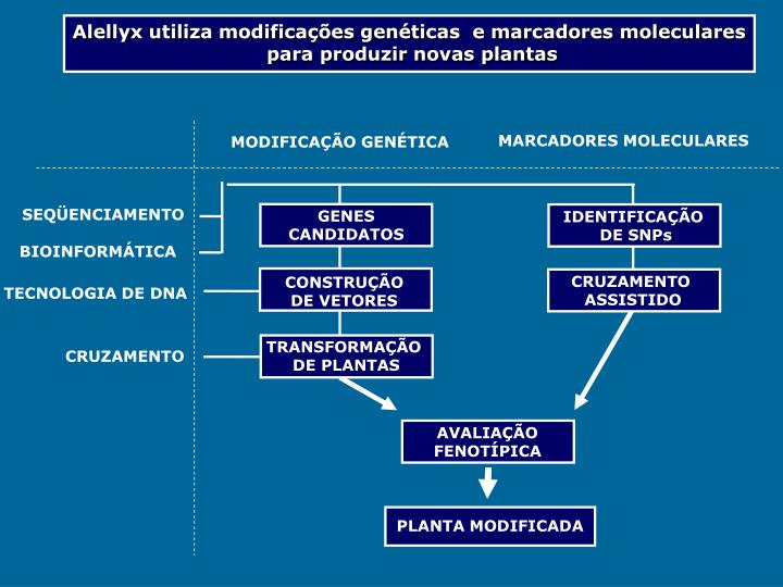 Alellyx utiliza modificações genéticas  e marcadores moleculares