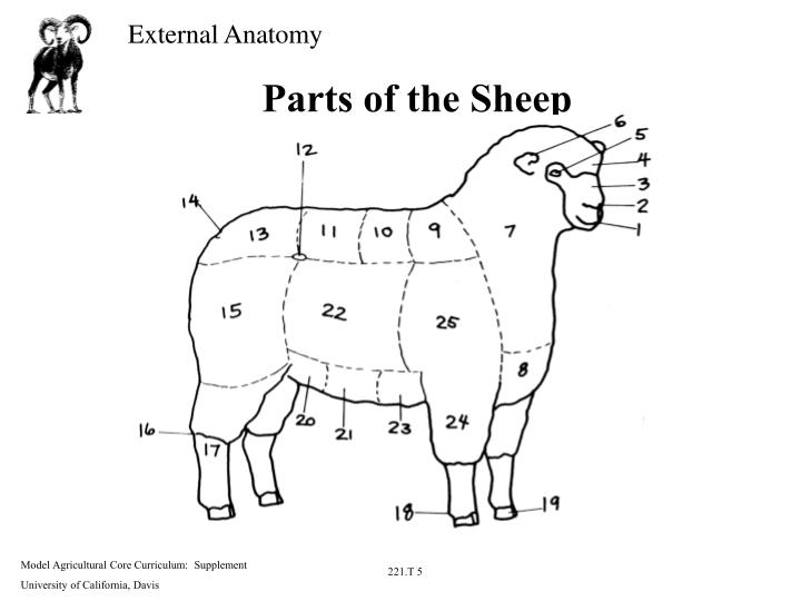 Ppt Parts Of The Beef Steer Powerpoint Presentation Id3571215